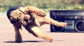 Amazing-Funny-Dancing-Dog-270x150