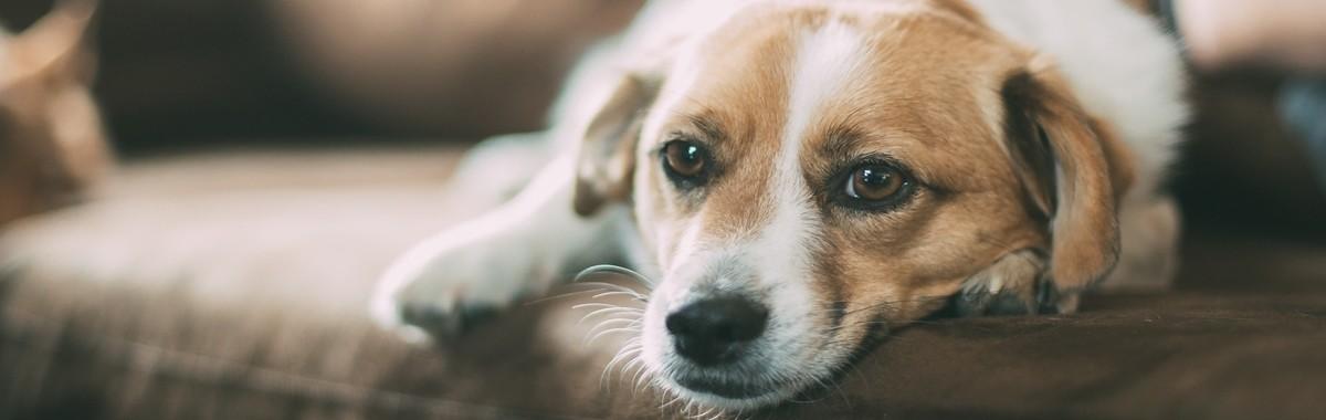 dog-1209154_1920