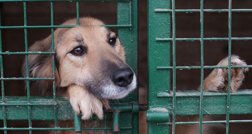 Adoptujmy psy z rozsądkiem