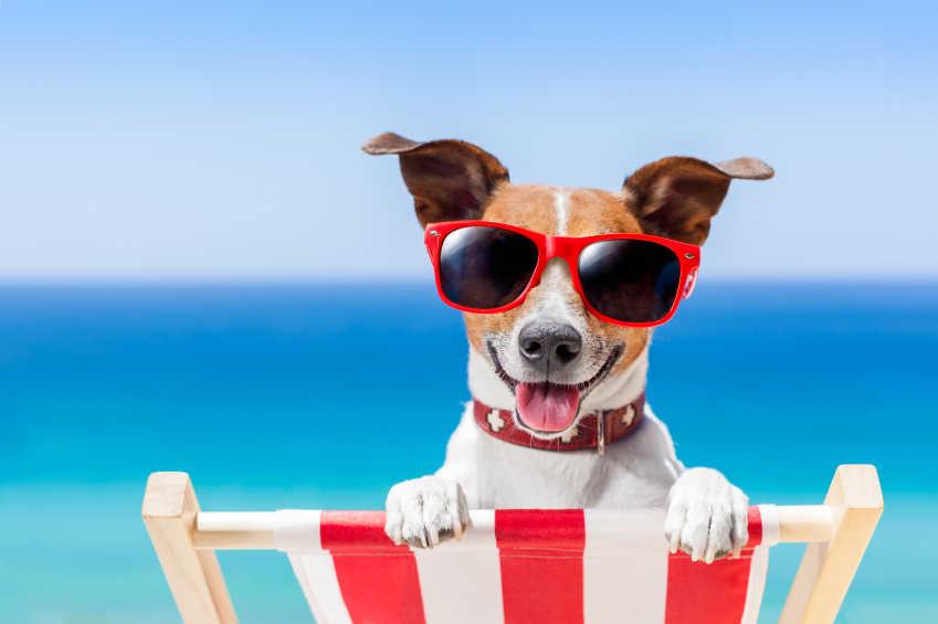 Mały pies na plaży. Pies na leżaku. Pies wakacje,.