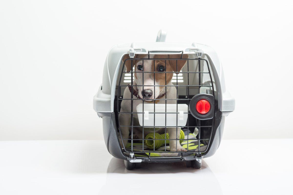 Pies w klatce. Pies w podróży, Pies samolot.