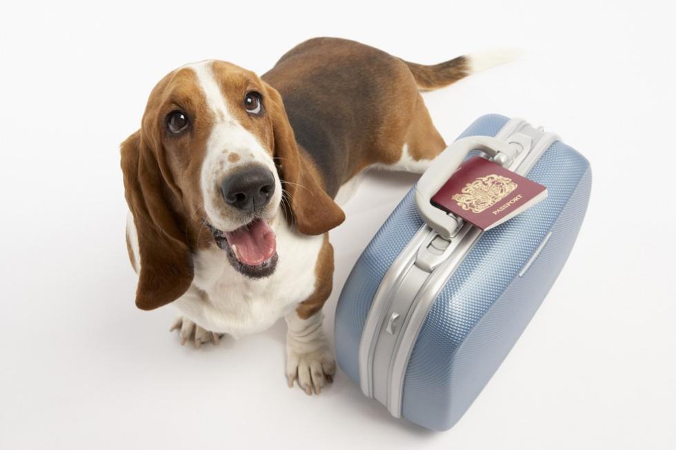 Pies z walizką. Pies na wakacjach.