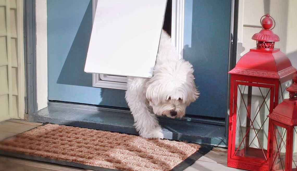 Pies przechodzi przez drzwiczki. Drzwiczki dla psów.