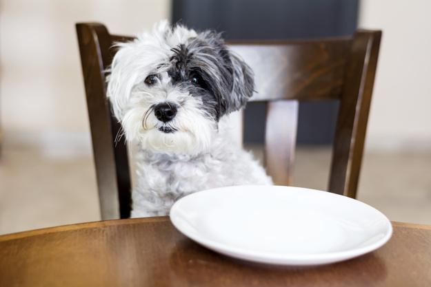 Pies siedzi na drewnianym krześle. Psie kawiarnie.