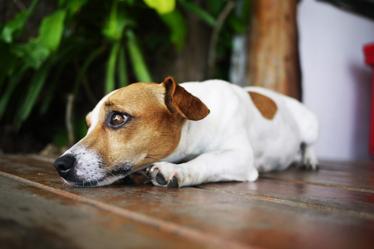 Pies leży na podłodze. Pies na tle rośliny.
