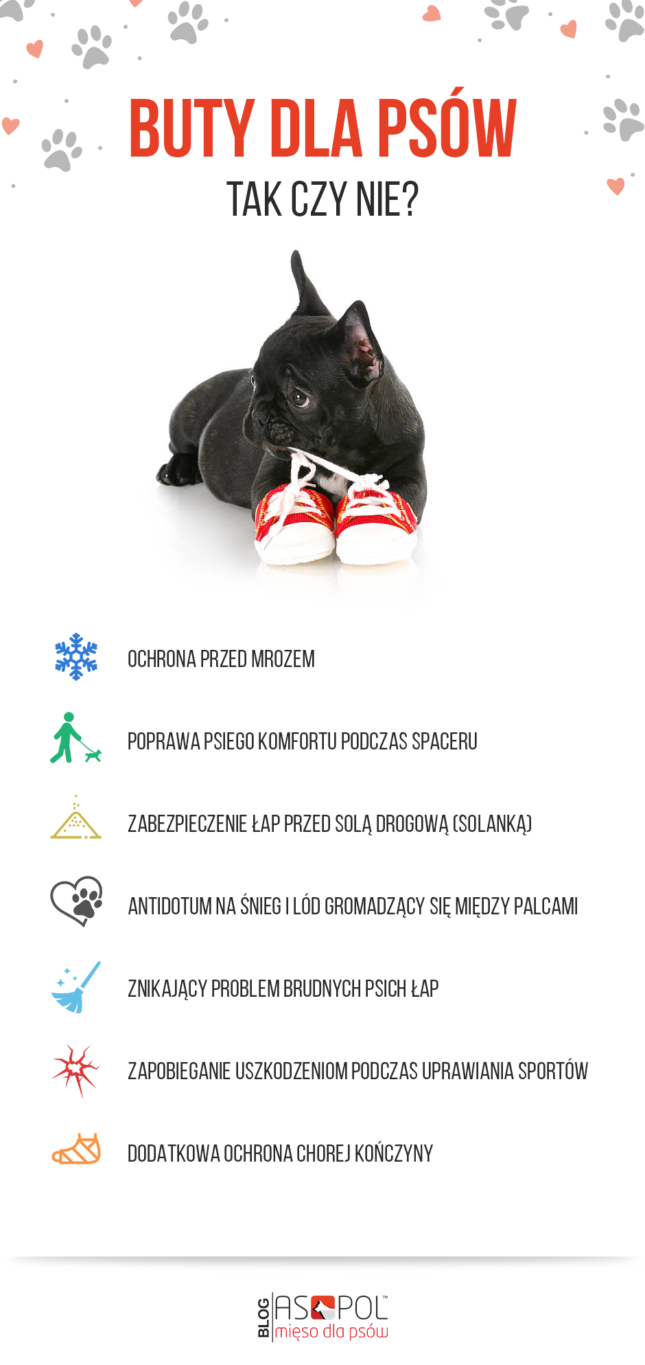 Pies w butach, zalety obuwia dla psów, infografika.