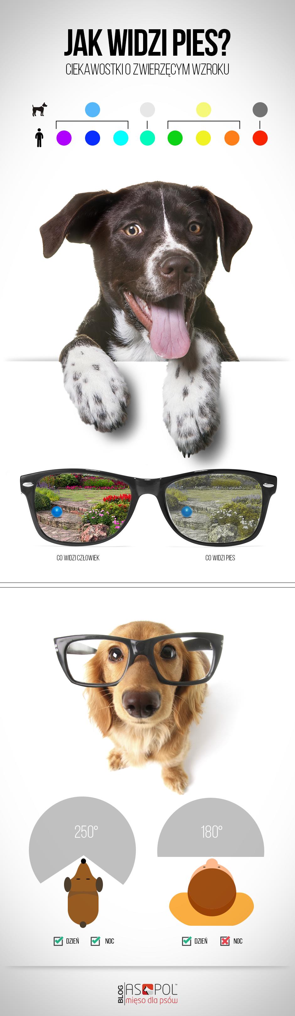 Psi wzrok, jak widzi pies infografika