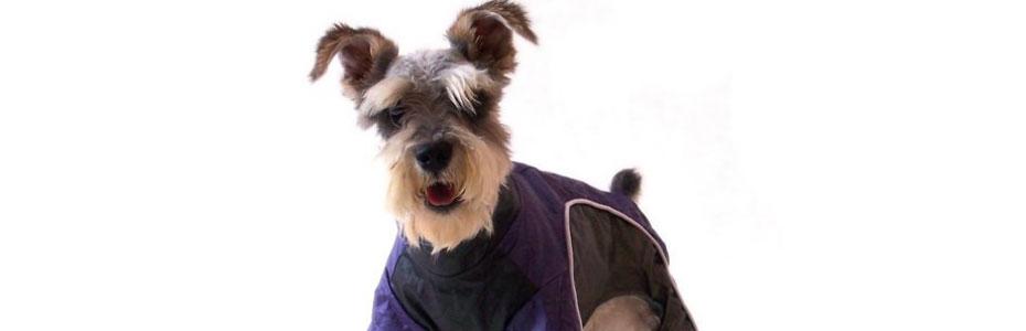 Niewielki pies w ubranku. Ubranka dla psów.