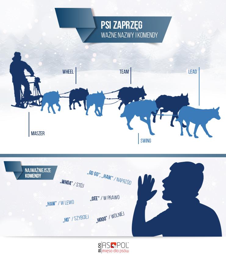 Infografika psi zaprzęg. Psi zaprzęg ciekawostki.