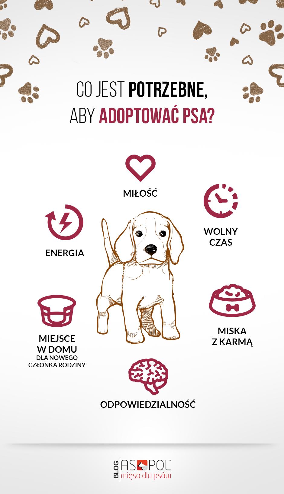 Warunki adopcji psów. Infografika.
